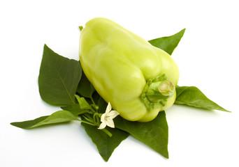 sweet green papper