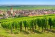 Vignoble à  Ammerschwihr , Alsace (Fr).