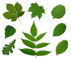 Auswahl verschiedener Blätter