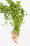 Fresh picked dill with roots