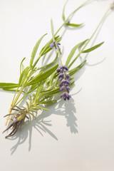 Munstead flower or lavender
