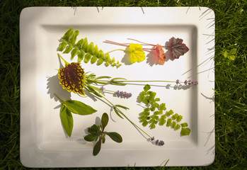 Mountain laurel, coleus, Queen Kimberly fern, lavender, ajuga and boston fern on platter