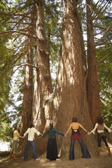 People holding hands around large trees