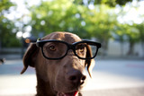Close up of dog wearing eyeglasses