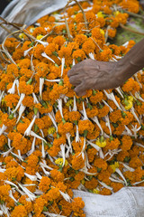 Hand reaching to pick up orange flower