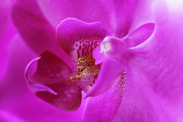 Close up of pink orchid
