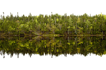 Forest trees reflected in lake