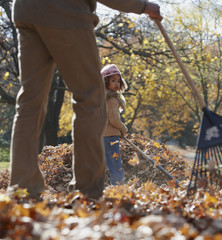 Black father and daughter raking autumn leaves