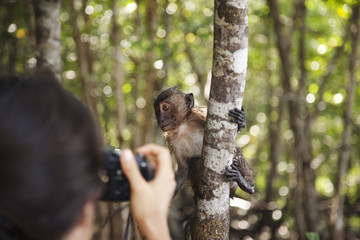 Hispanic woman taking photograph of monkey in jungle