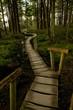 Wooden walkway through forest