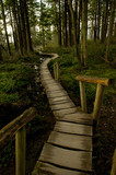 Wooden walkway through forest