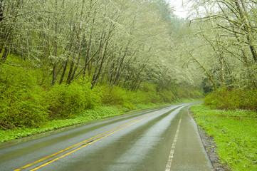 Remote highway through forest