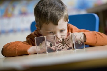Caucasian boy looking at spider in classroom