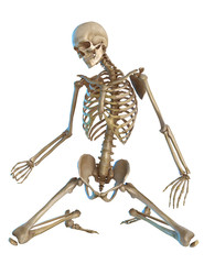 skeleton  kneeling