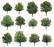 Big set with different trees on white background