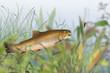 Fische 142