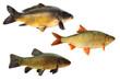 Fische 149