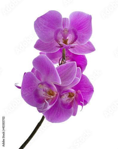 Fototapeten,orchidea,schönheit,blühen,blume