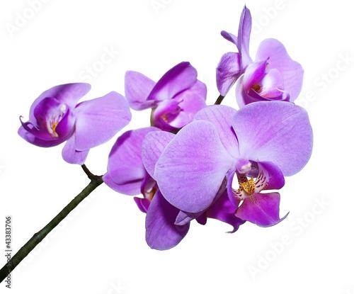 Fototapeten,garten,orchidee,rosa,tropisch