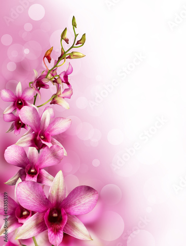 pink tropical orchids
