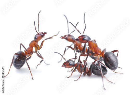 team of ants, meeting
