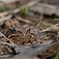 Frog in spring