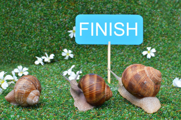 Three snails rushing to the finish