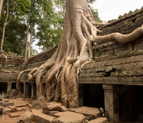 Ta Prohm Temple in Angkor Thom Cambodia