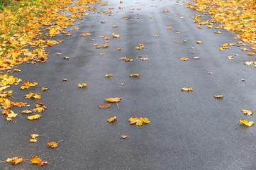 Regennasse Straße im Herbst, Ahornlaub, Reinigungspflicht