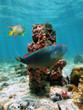 Column of sea sponges