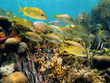 Shoal of grunt fish in a reef
