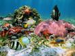 Starfish and corals