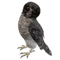 Beautiful 3D Rendered Hawk Owl