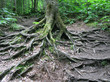 Sprawling Tree Roots 2