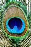 Fototapeta ptak - skrzydło - Ptak