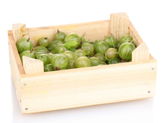 Green gooseberry in crate isolated on white