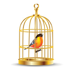 golden bird cage with bird inside