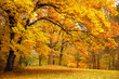Autumn / Gold Trees in a park - 43414176