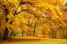 Jesień / złote drzewa w parku