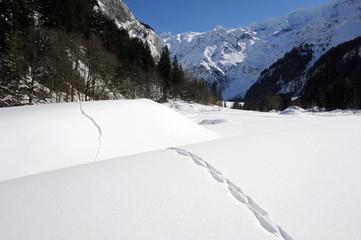 Traccie nella neve ad Engelberg nelle alpi svizzere