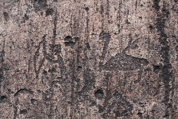 Rock paintings (petroglyphs) of Zalavruga. Swan