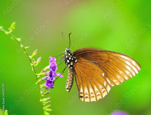 Deurstickers Vlinder Cloce-up Butterfly