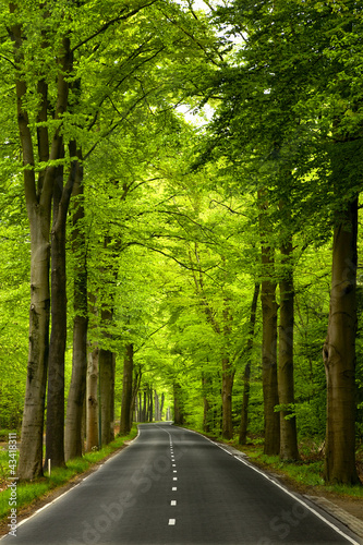 canvas print picture Beautiful road
