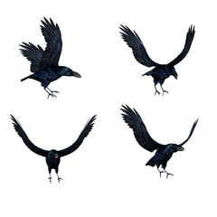 3D Crows Flying