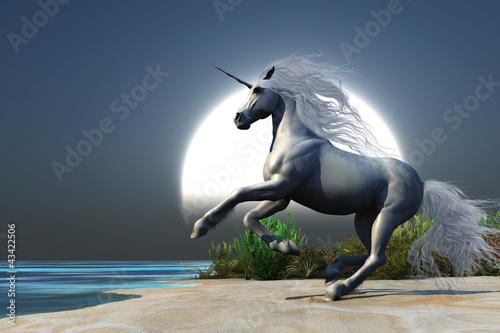 Fototapeten,einhorn,pferd,magical,fantasy