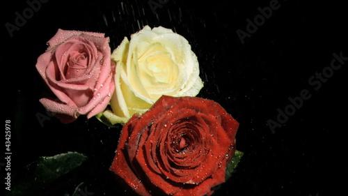 superpads谱子roses