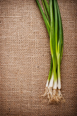 green onions on the textural background is