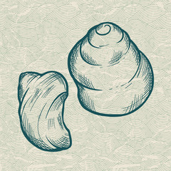 Sea shell. Original hand drawn illustration in vintage style.