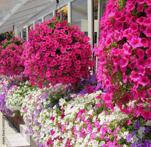 Blumenampel ums Haus
