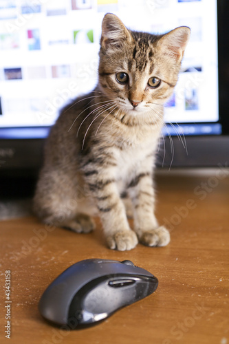 Papiers peints Chat Cat with Display